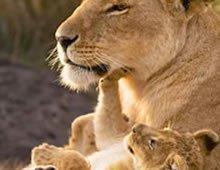 www.africanluxurysafaris.net